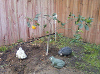 orange tree vigil