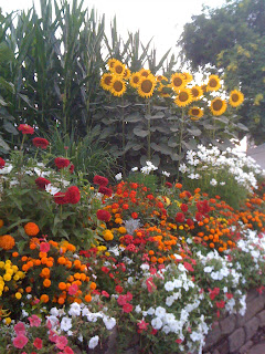Sunflowers at the State Fair