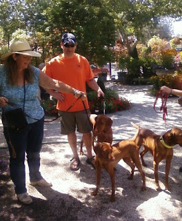 Vizsla Pointers with owner and breeder out for a day at the nursery