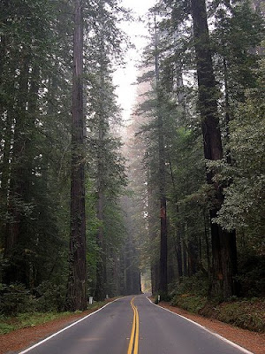 Avenue of the Giants, Humboldt Redwood State Park in Northern California