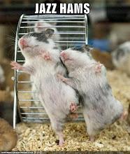 Jazz Hamsters