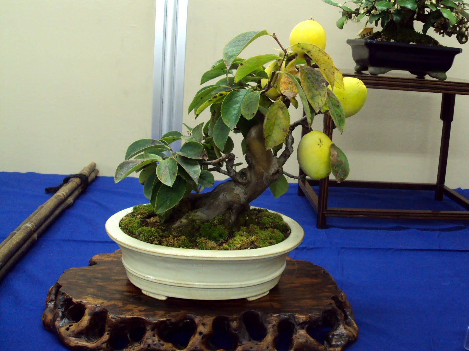 fruit appetizers bonsai fruit tree