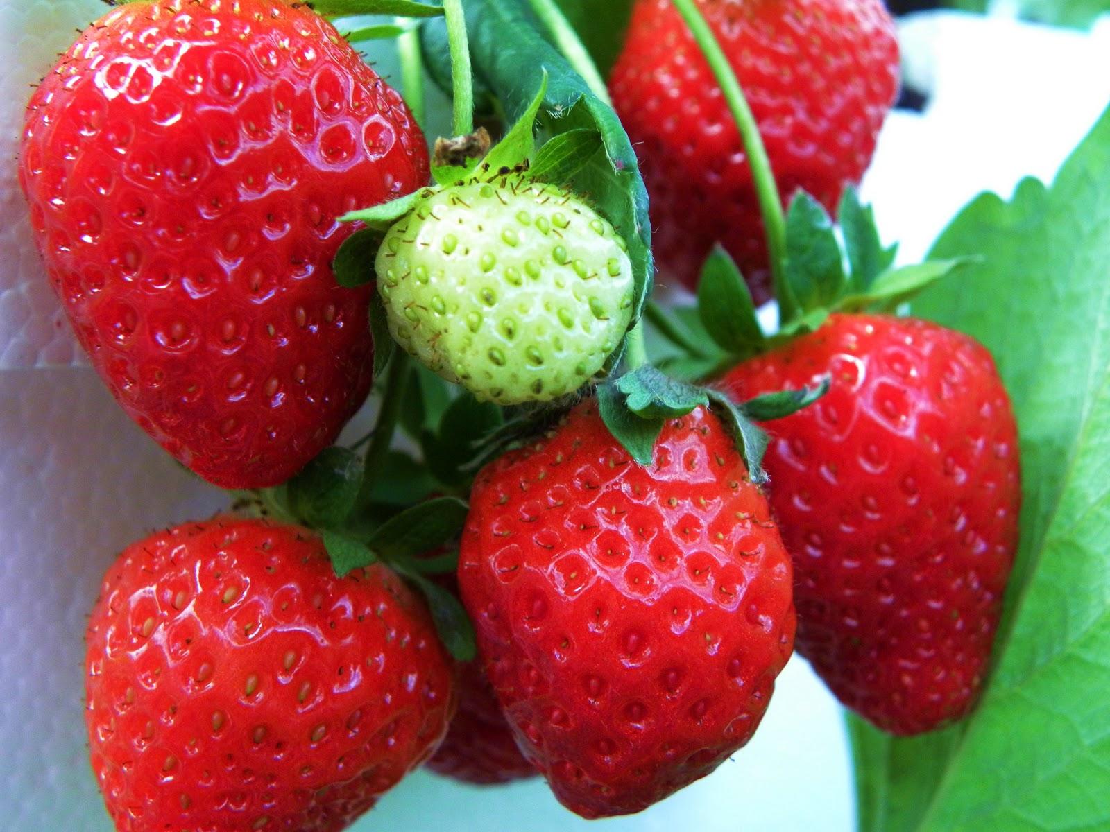 My Hawaiian Home: Chipotle, Strawberry & Lilikoi Jam