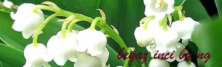 Beyaz İNCİ