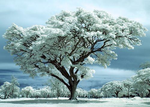 Afschaffing van motregen, broeierig weer en dagen die toch nergens voor dienen en in plaats daarvan een regelmatige afwisseling van sneeuw, aangenaam warm weer, frisse herfstochtenden en verkwikkende en heerlijk geurende lentebuitjes.