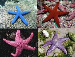 Rainbow seastars!