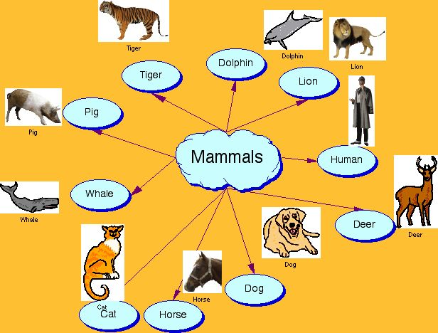 BILINGUAL RESOURCES (Images and Pictures): SCIENCE IMAGEN - Mammals