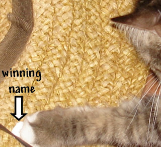 winning-name-under-paw