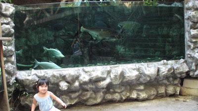Manila Ocean Park: Oceanarium [April 2010] 5