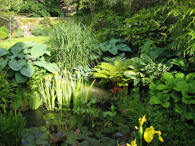 hosta, iris, bambus, nuferi