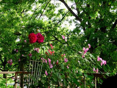 bolta cu trandafiri
