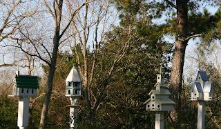 arhitectura diversa pentru casute pasari