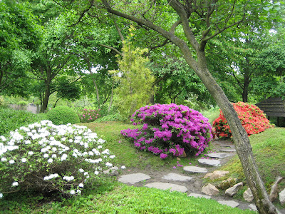 azaleea in gradina romantica