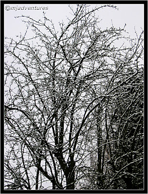 Pear tree under snow
