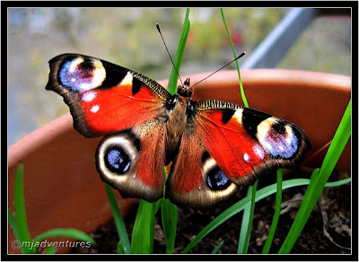 Late_Butterfly
