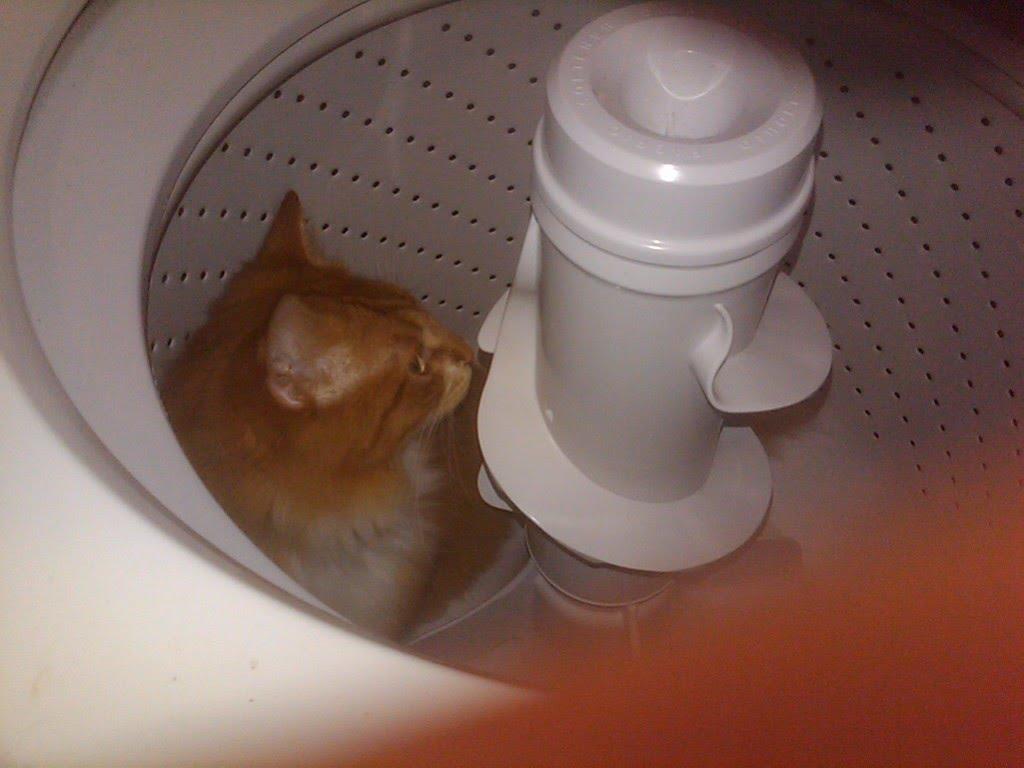 [kittenwasher.jpg]