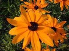 Misplaced petals make us Unique