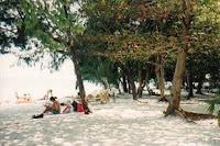 Pepohonan yang rindang, Pantai di Pulau Sepa