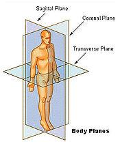 Figura 01 - Posição Anatomica - Planos