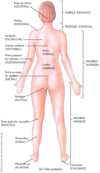 Figura 04 - Região Posterior