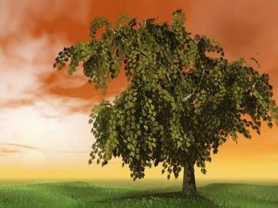 Zamzamweb escribir un libro plantar un rbol y tener un for Como se desarrolla un arbol