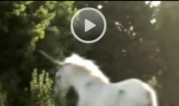 Real Unicorn Sightings