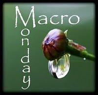 Macro Monday
