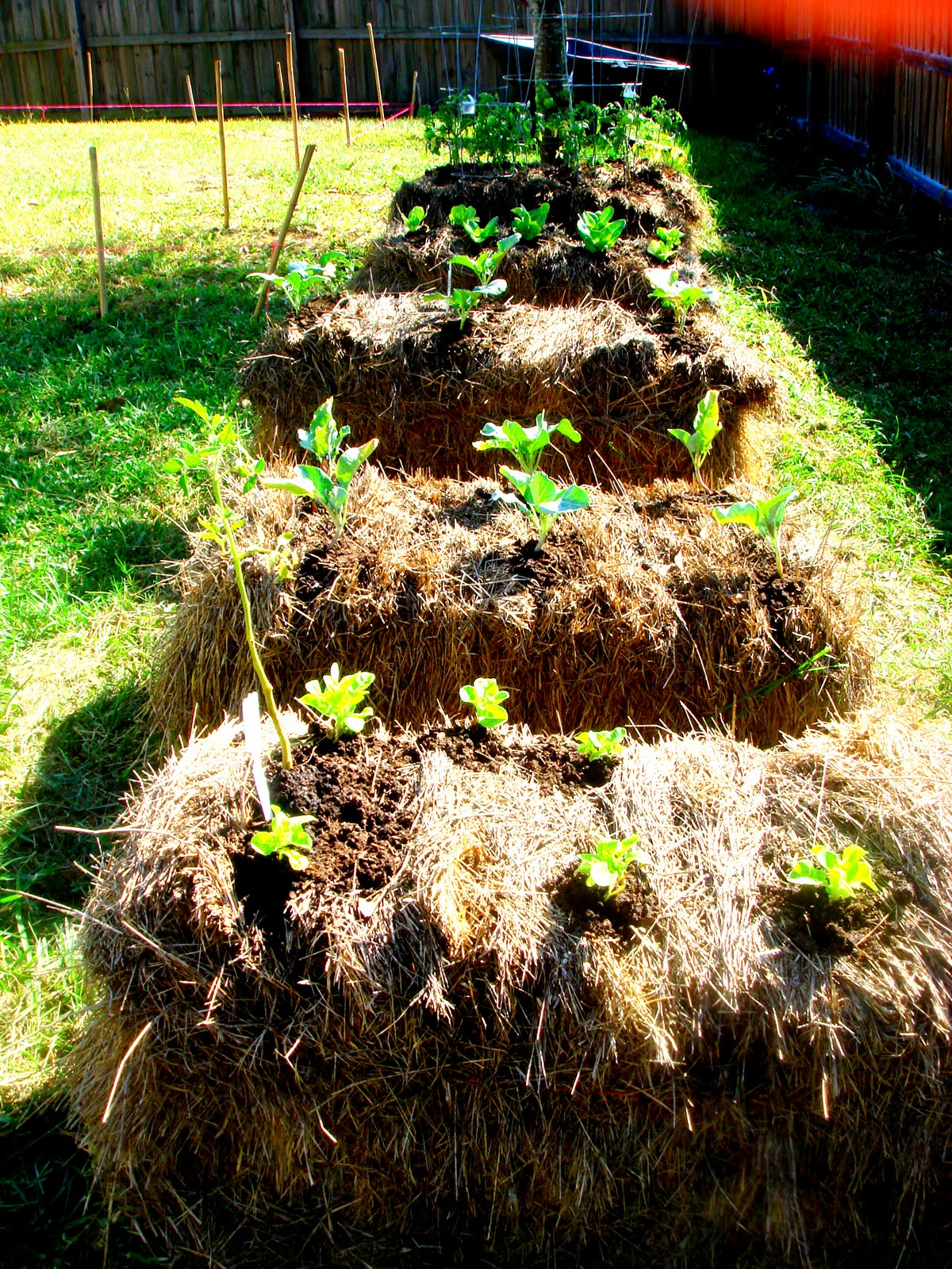 The Glig Life: Hay Bale Gardening