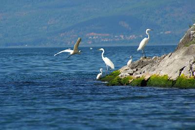 Parco Nazionale dei Laghi di Prespa - (Albania Grecia e Macedonia)