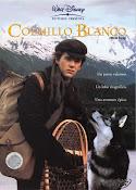 Colmillo Blanco (1991) [Latino]