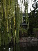 Cline Pond