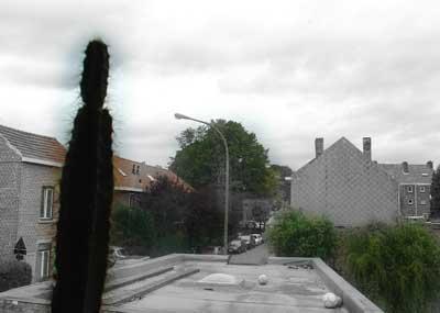 Cactus Kessalloniki Simplex
