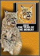 Year of the Bobcat 2010