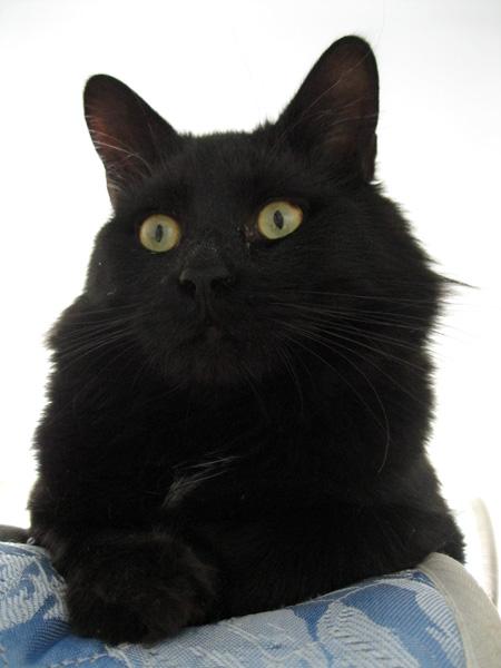 katia au pays des merveilles comment changer de matelas avec des chats. Black Bedroom Furniture Sets. Home Design Ideas