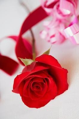 celebrate rose day