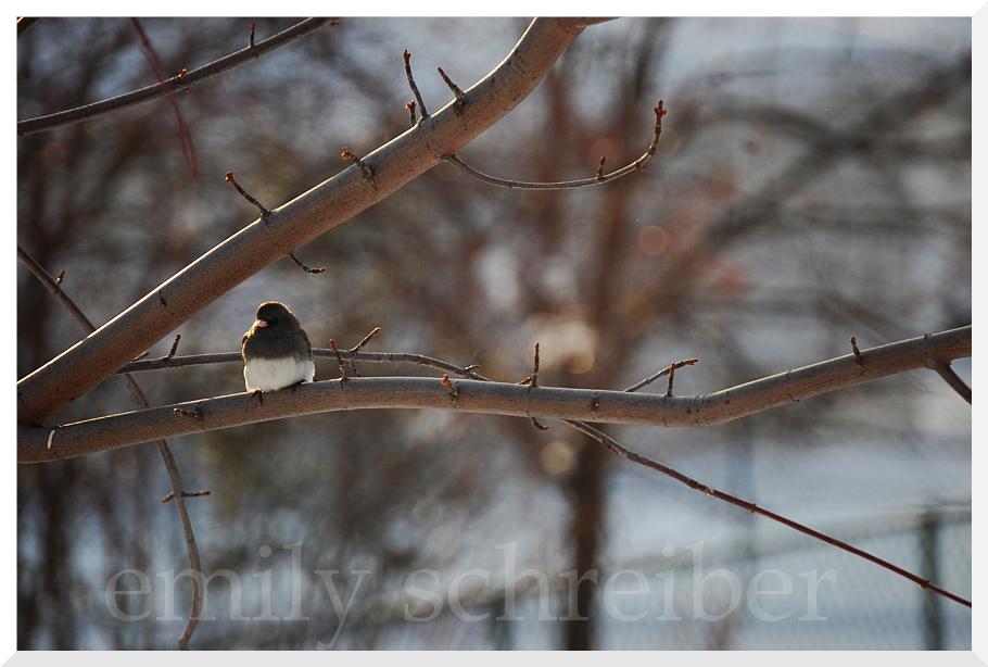 [bird.png]
