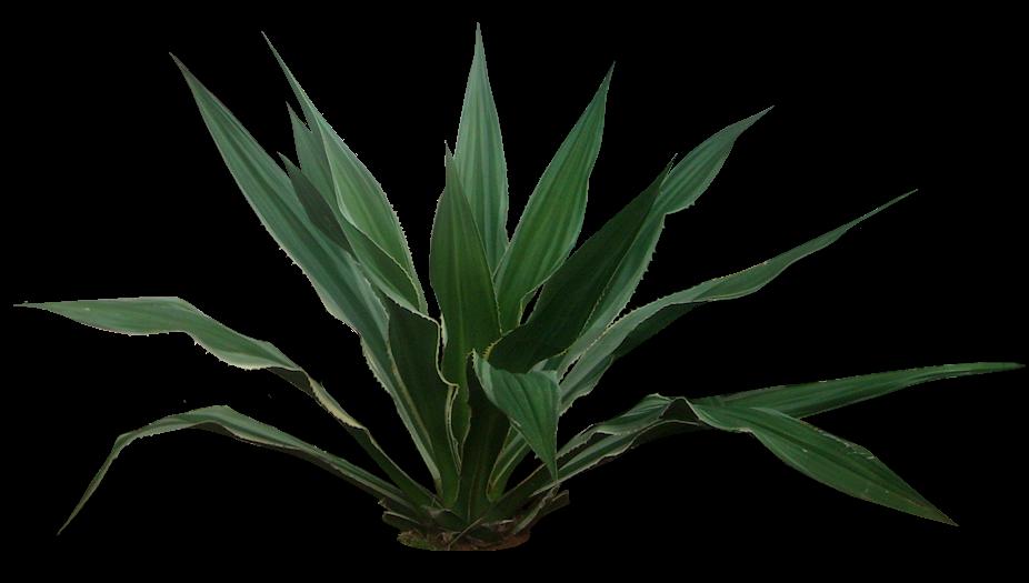 Plus de 1000 id es propos de vegetales sur pinterest for Recherche plante