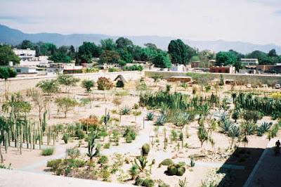 cactus succulent garden