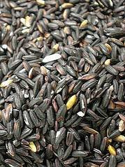 grains of black rice