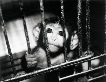 Animal testing persuasive speech