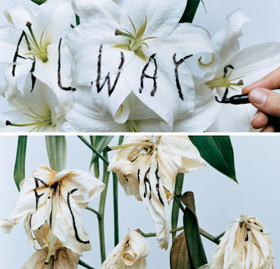 always by Stefan Sagmeister