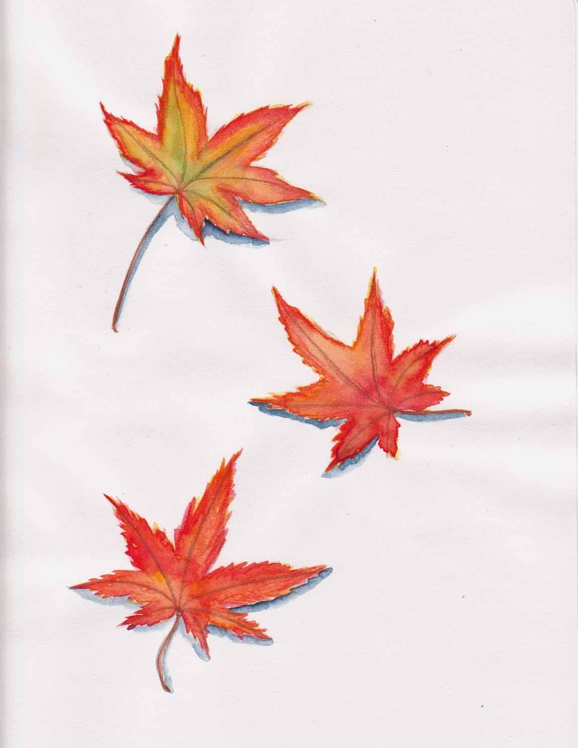 Naomi orana 39 s studio autumn 39 s japanese maple Japanese maple leaf