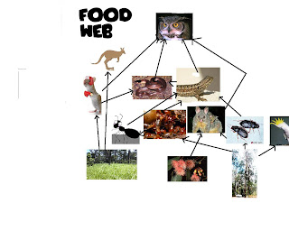 Magpie Food Chain