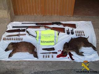Crías de jabalí matadas por cazadores furtivos y numerosas armas incautadas por el SEPRONA.