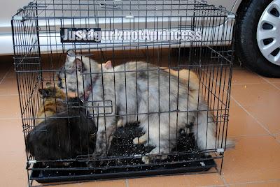 Mari membersihkan Istana Kucing