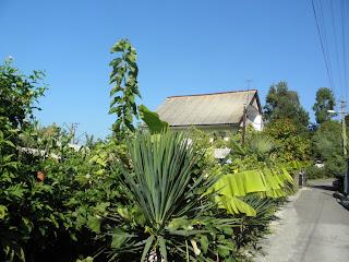 Обычный дом в окружении зелени