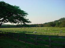 Fazenda em Campinas