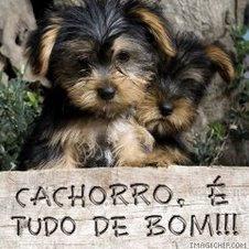 CACHORRO É.....