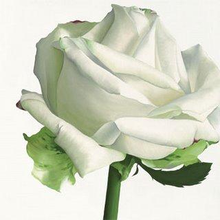 [IG2032~White-Rose-I-Posters.jpg]