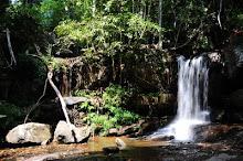 In Cambogia esiste ancora la vera jungla